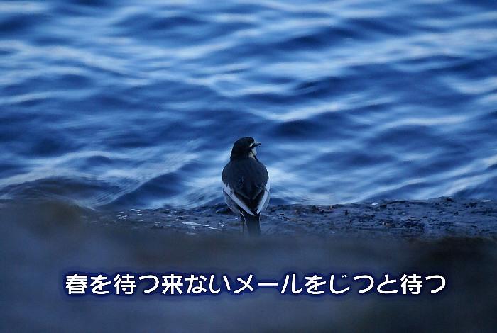 c0186592_20193643.jpg