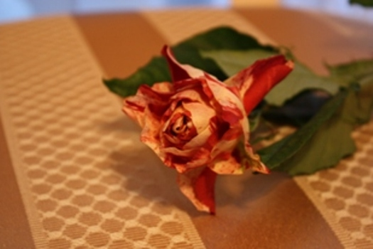 マーブル模様の薔薇*_f0181000_11195985.jpg