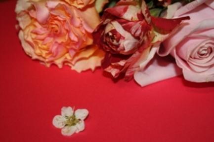 マーブル模様の薔薇*_f0181000_11214162.jpg