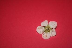 マーブル模様の薔薇*_f0181000_11235232.jpg