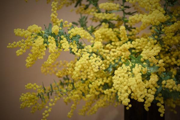 庭の花をを飾った。_f0077521_2334448.jpg