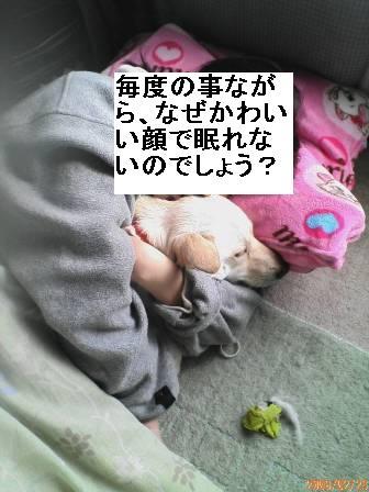 f0195543_18531067.jpg