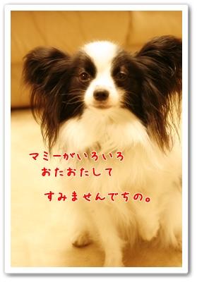 d0013149_10113724.jpg