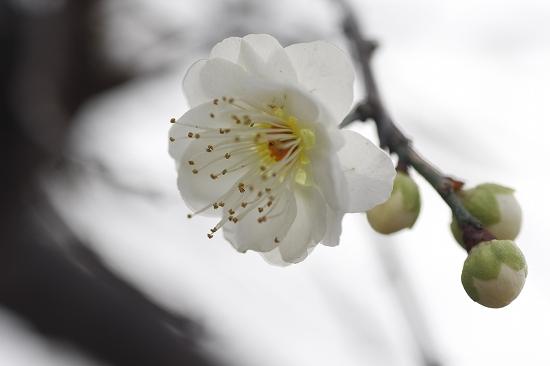 春の訪れ_c0155950_045171.jpg