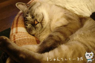 寝ていてもモデル小僧_e0031853_18402653.jpg
