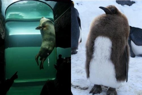 最北の動物園_c0184265_0383253.jpg