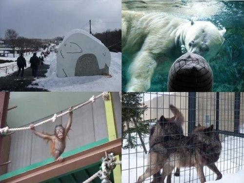 最北の動物園_c0184265_0385368.jpg