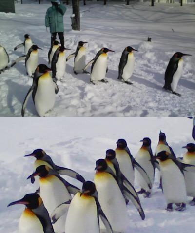 最北の動物園_c0184265_0392958.jpg