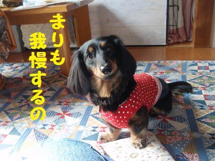 c0151866_201194.jpg