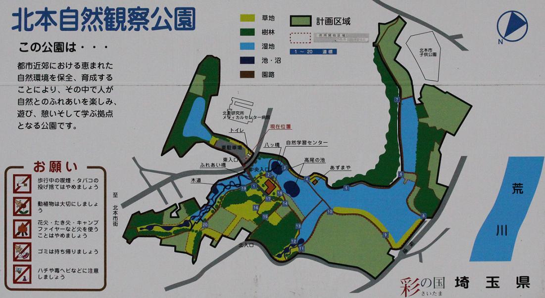 白梅とジョウピタキ          北本自然観察公園_a0107574_19495499.jpg