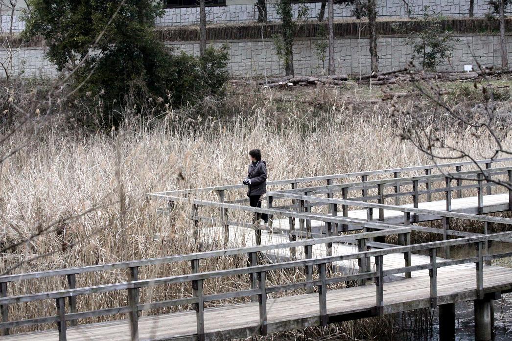 白梅とジョウピタキ          北本自然観察公園_a0107574_1950351.jpg