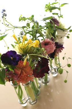 Fleurs printanieres_f0127281_23362080.jpg