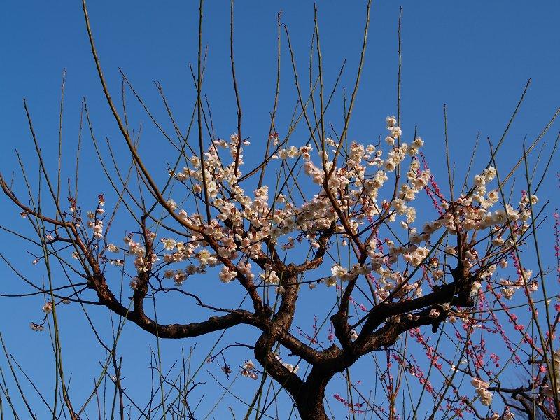 大阪城公園 梅林 その2_c0187587_0322651.jpg