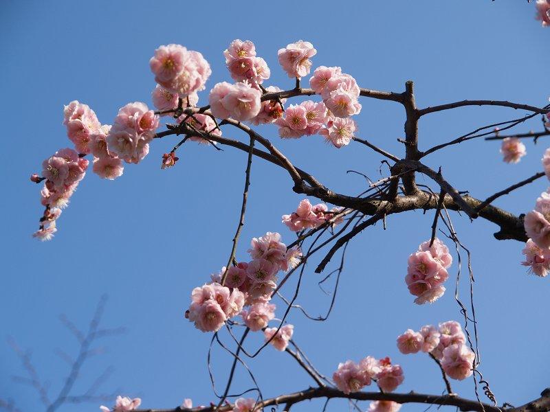 大阪城公園 梅林 その2_c0187587_0362774.jpg