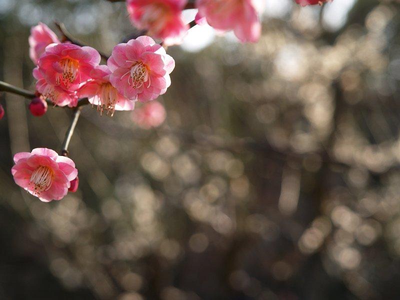 大阪城公園 梅林 その2_c0187587_0383584.jpg
