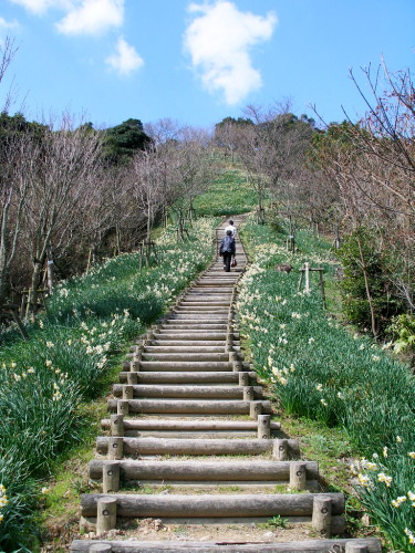 白野江植物公園では河津桜が満開_c0036203_184608.jpg