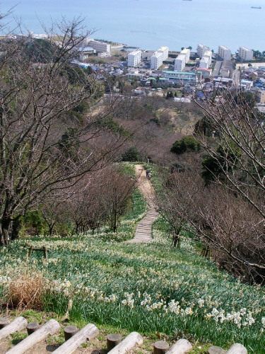 白野江植物公園では河津桜が満開_c0036203_18473673.jpg