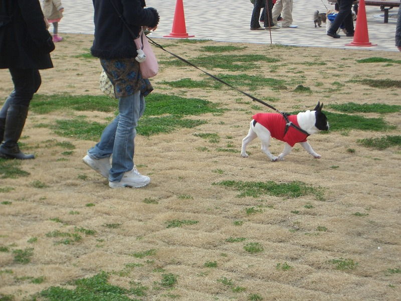 犬嫌いの私が、なぜここに?_f0141310_22432560.jpg