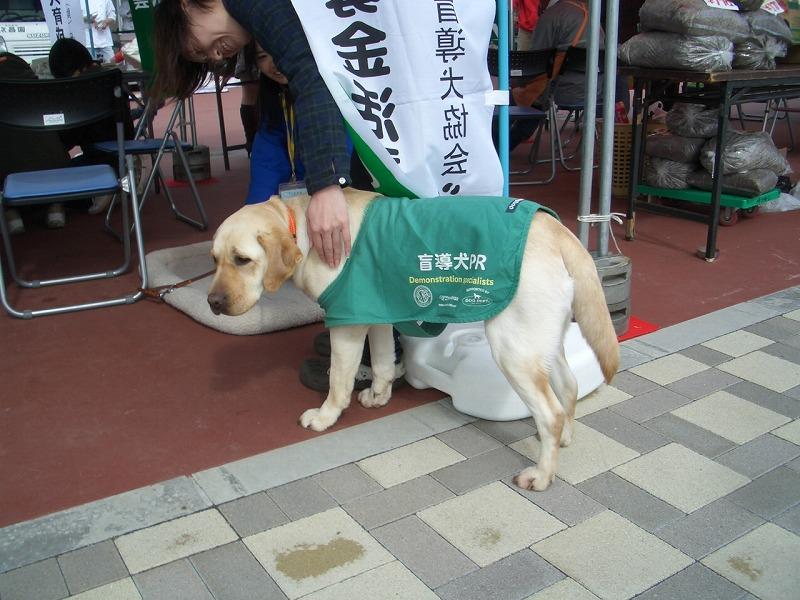 犬嫌いの私が、なぜここに?_f0141310_22442957.jpg