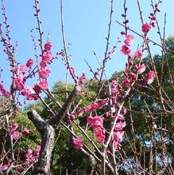 小春日和の幸せな一日_c0073813_19485748.jpg