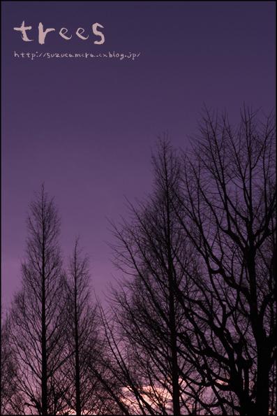 冬の木立_f0100215_0252191.jpg