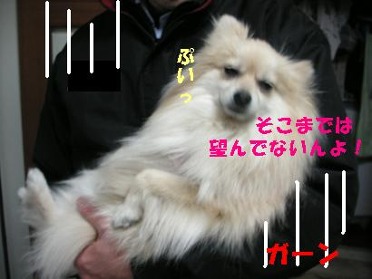 c0179136_3405689.jpg