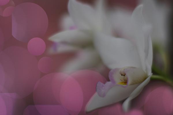 f0159251_22371265.jpg