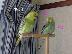 f0196665_0413837.jpg