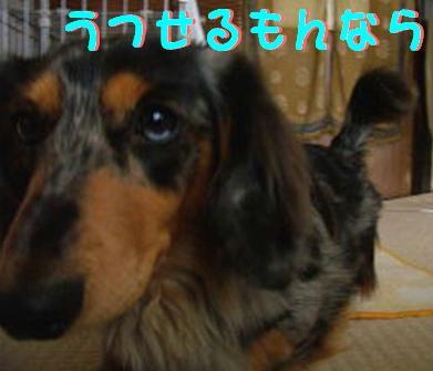 f0195891_214323.jpg
