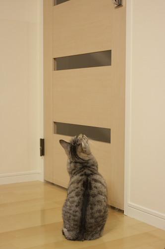 ドアハンドルを見上げるお嬢さん