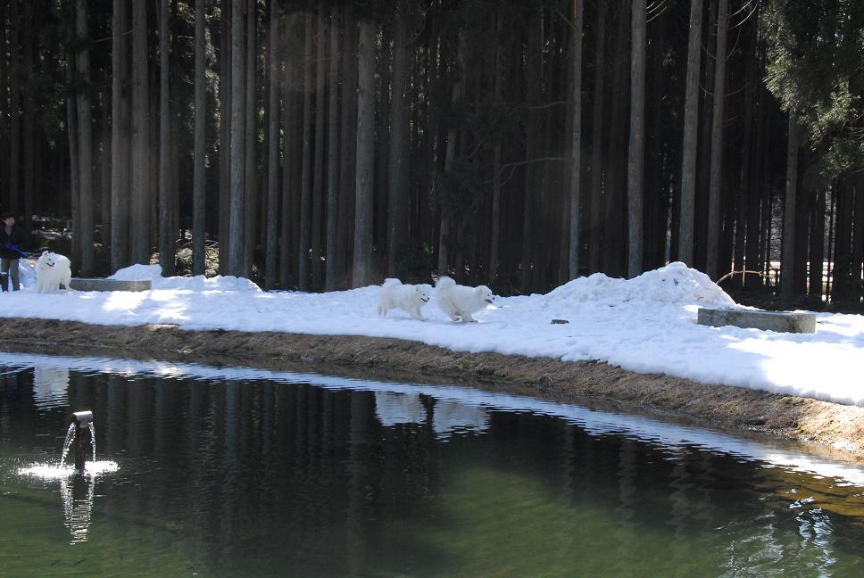 雪あったよ~♪_a0049296_21202063.jpg
