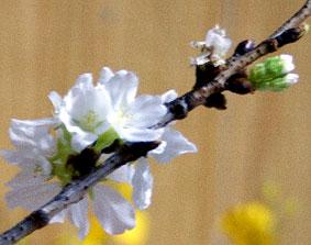 花たより届く_b0145296_21464836.jpg