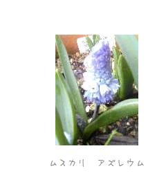 b0120001_2275641.jpg