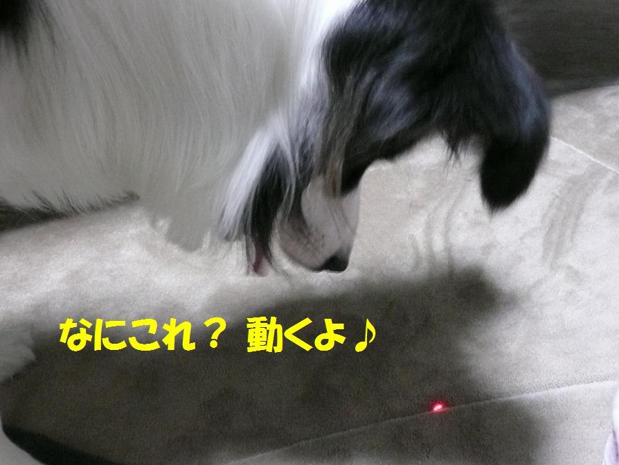 c0147241_243339.jpg