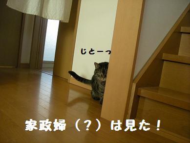 f0081100_1233298.jpg