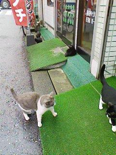 猫_e0041337_1024585.jpg