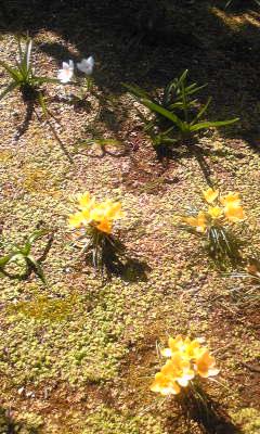 春はまだか~_c0131063_156124.jpg