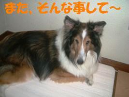 d0140668_84709.jpg