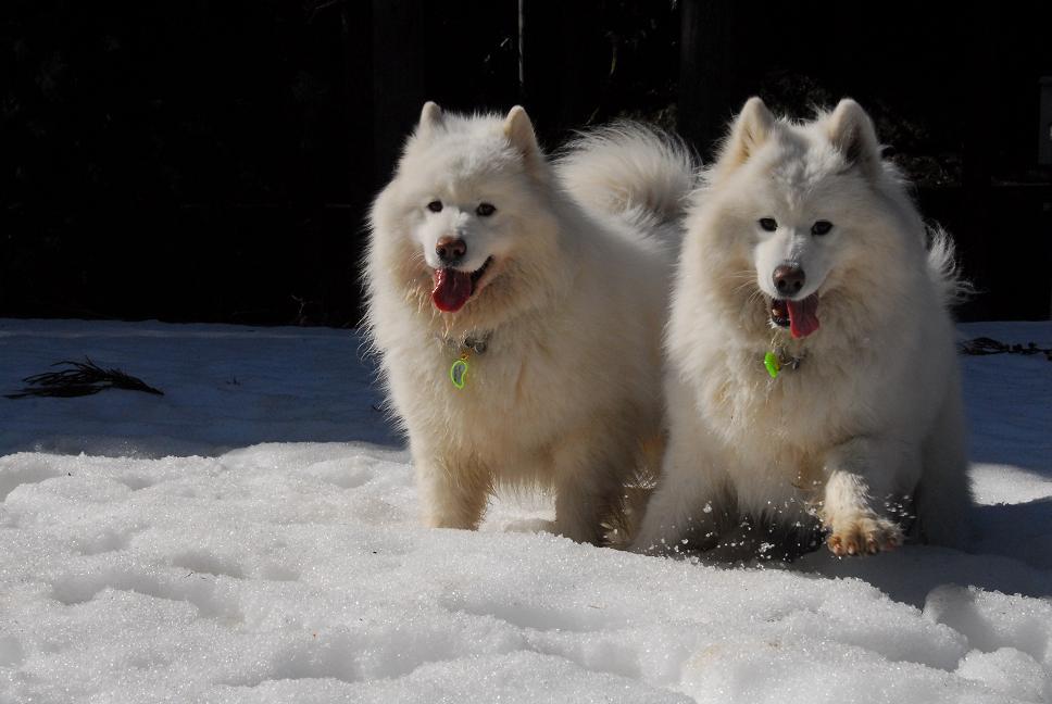 雪遊びに行ってきました♪_a0049296_1183272.jpg