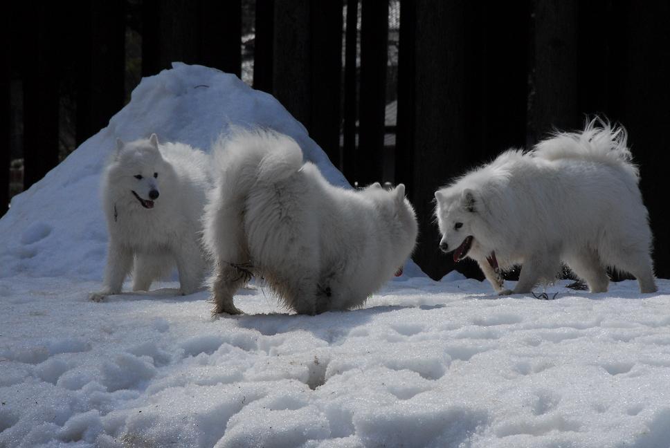 雪遊びに行ってきました♪_a0049296_518678.jpg