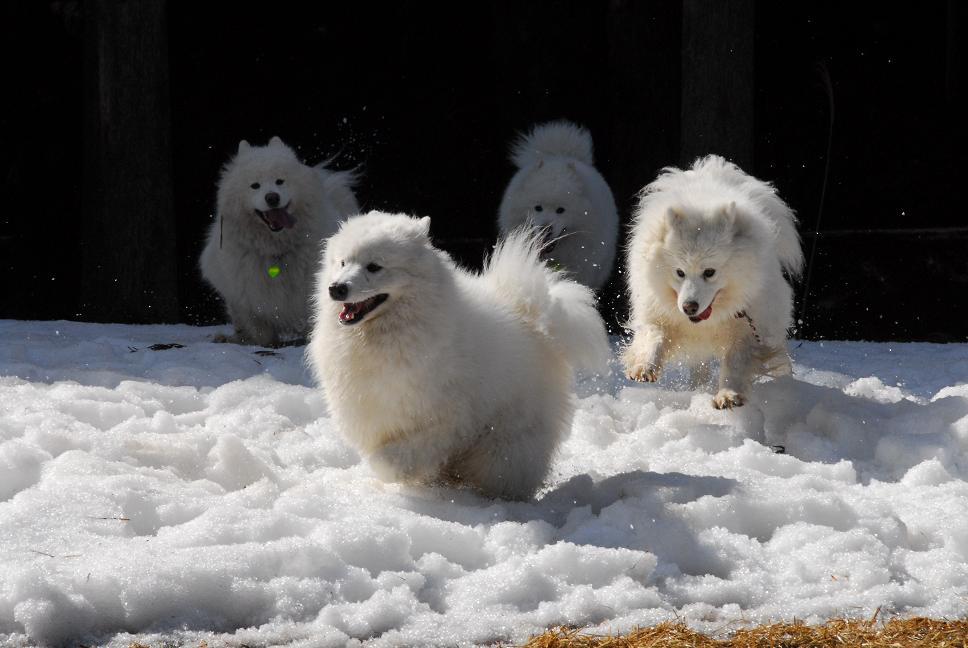 雪遊びに行ってきました♪_a0049296_520163.jpg