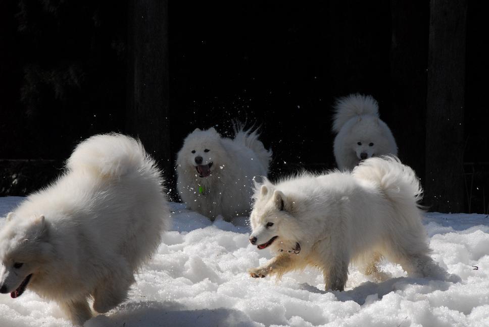 雪遊びに行ってきました♪_a0049296_520304.jpg