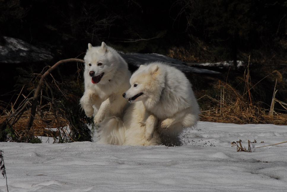 雪遊びに行ってきました♪_a0049296_5244683.jpg