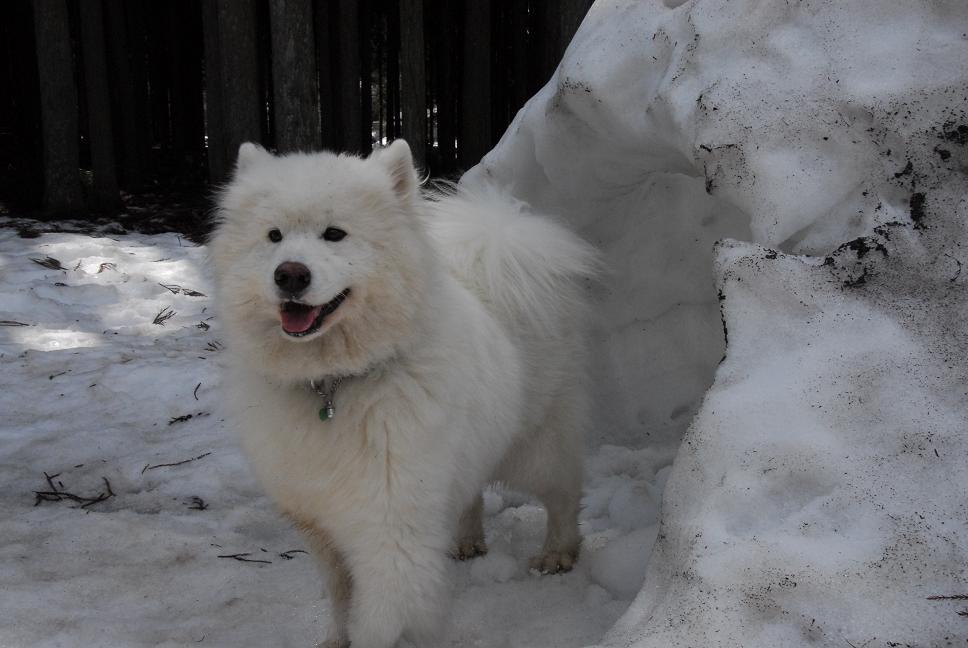 雪遊びに行ってきました♪_a0049296_5285430.jpg
