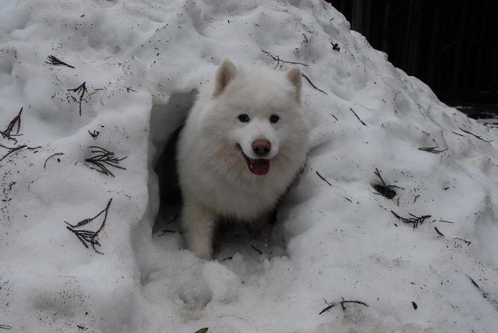 雪遊びに行ってきました♪_a0049296_5304356.jpg