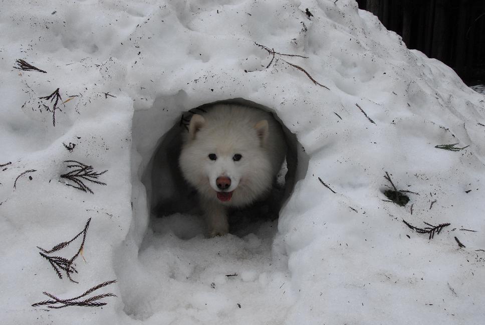 雪遊びに行ってきました♪_a0049296_5383814.jpg