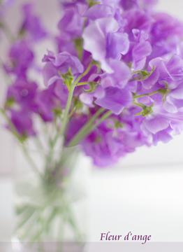 ◆春のスイートピー◆_b0111306_22191761.jpg