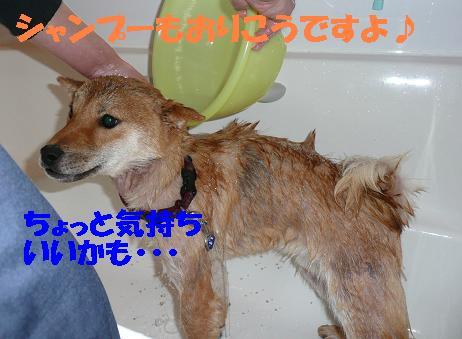 f0121712_18405064.jpg