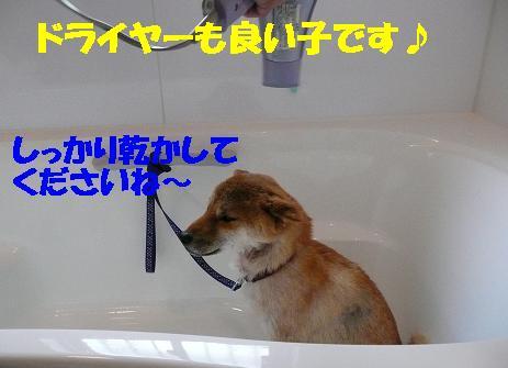 f0121712_18412648.jpg