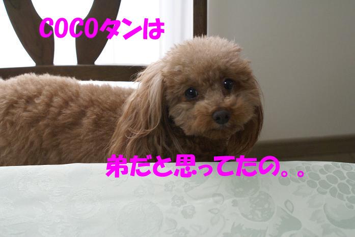 a0101143_16383910.jpg